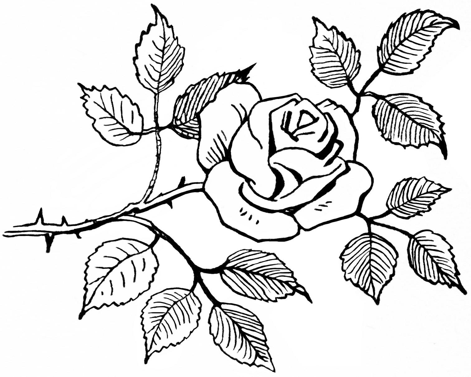 Knumathise rose images. Beauty clipart black and white