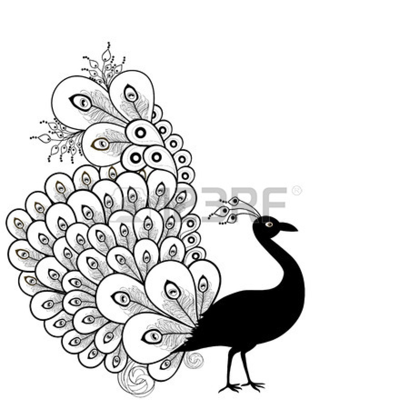 Peacock panda free images. Beautiful clipart black and white