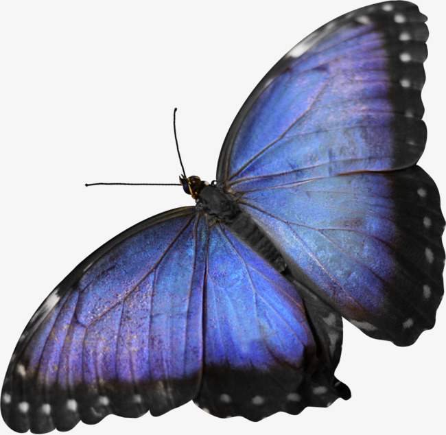 Beautiful clipart blue butterfly. Pretty flash flashing png
