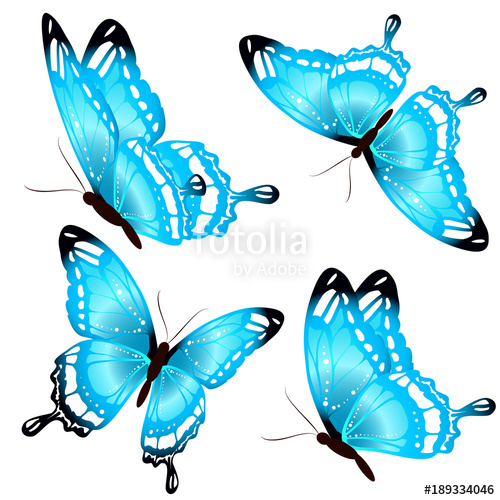 Butterflies isolated on a. Beautiful clipart blue butterfly