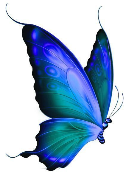 Beautiful clipart blue butterfly.  best mariposas images