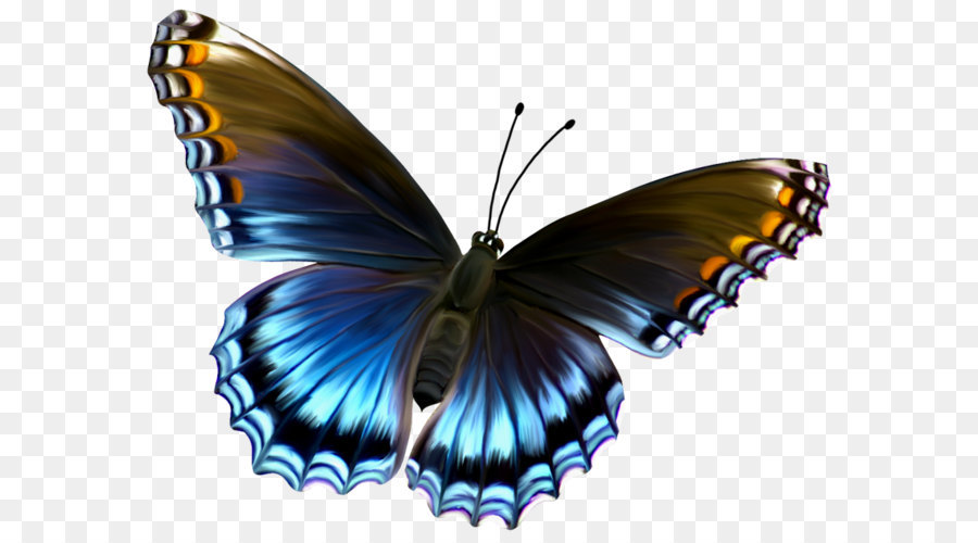 Clip art blue and. Beautiful clipart butterfly