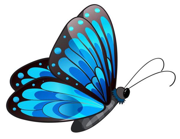 Beautiful clipart butterfly.  best butterflies blue
