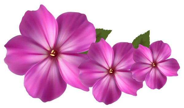 Beautiful flower png. Pin by slgudiel on