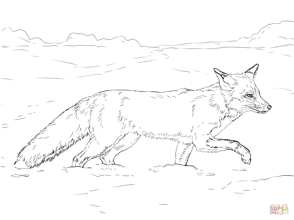 Arctic coloring page best. Beautiful clipart fox