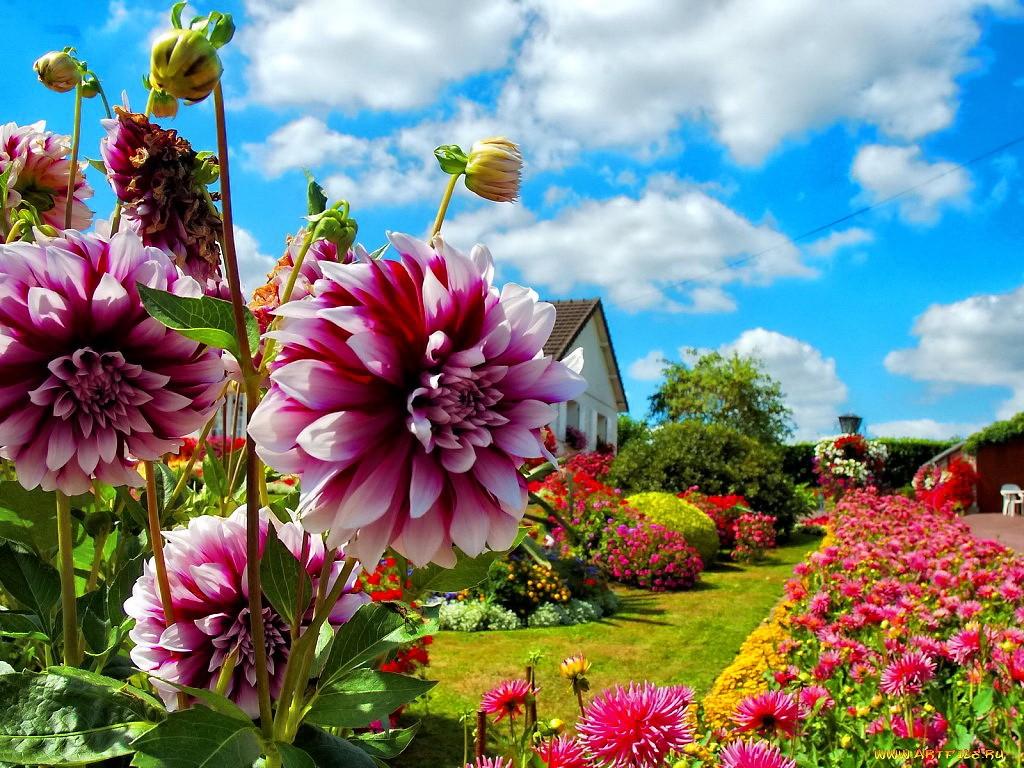 Beautiful clipart garden. Flower park flowers grass