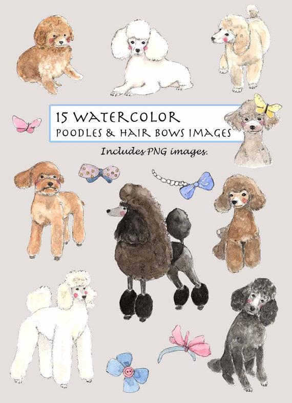 Beautiful clipart poodle. Clip art watercolor poodles