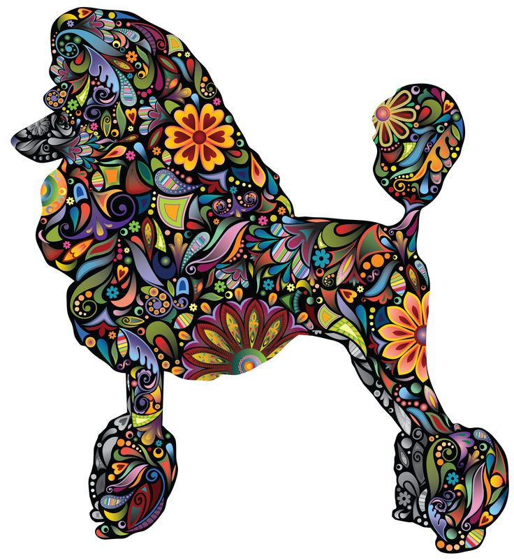 best art projects. Beautiful clipart poodle