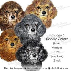 Beautiful clipart poodle. Painting ideas pinterest dog
