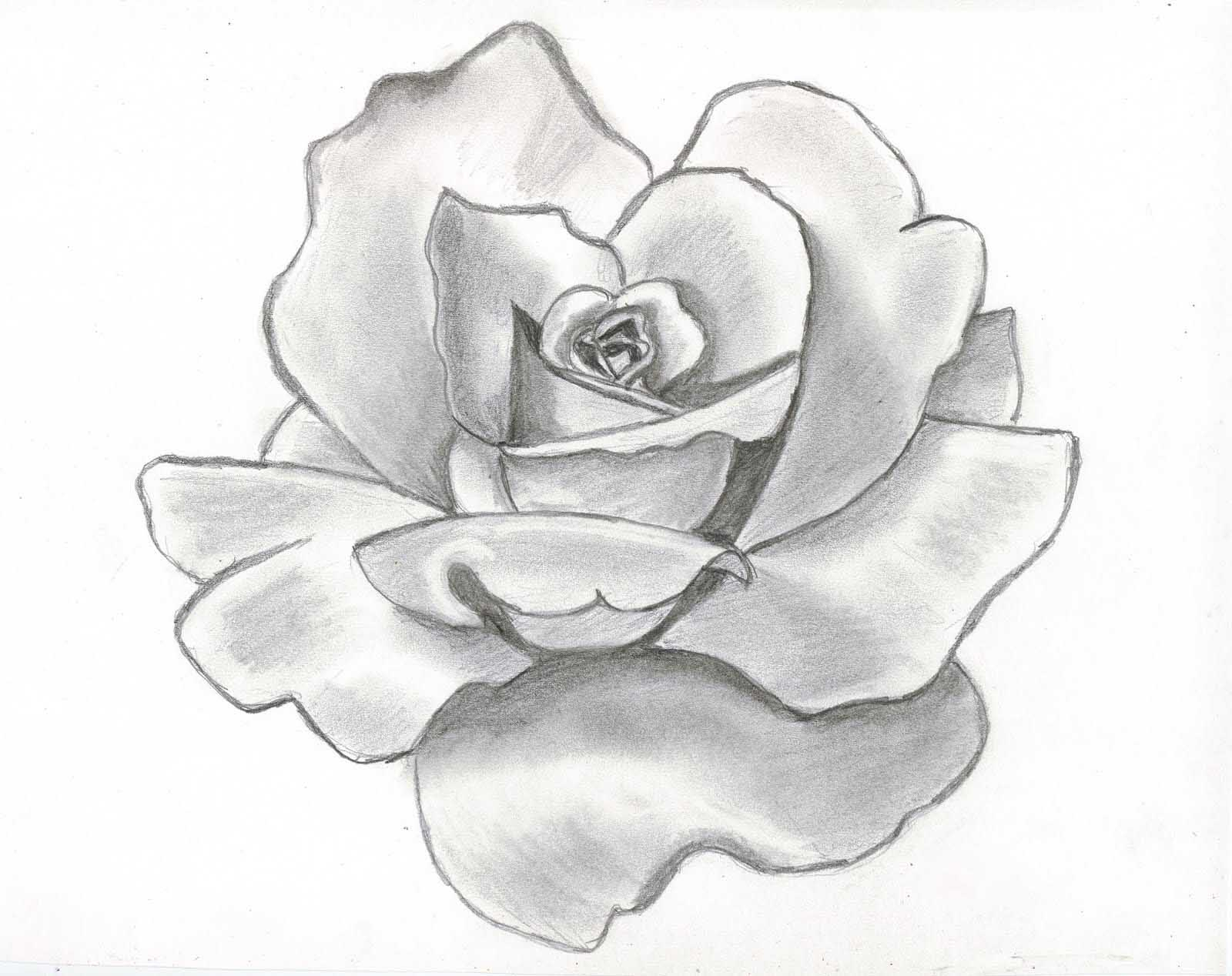 Beautiful clipart pretty. Flower sketches drawing drawings