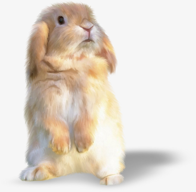 Brown bunny pretty stay. Beautiful clipart rabbit
