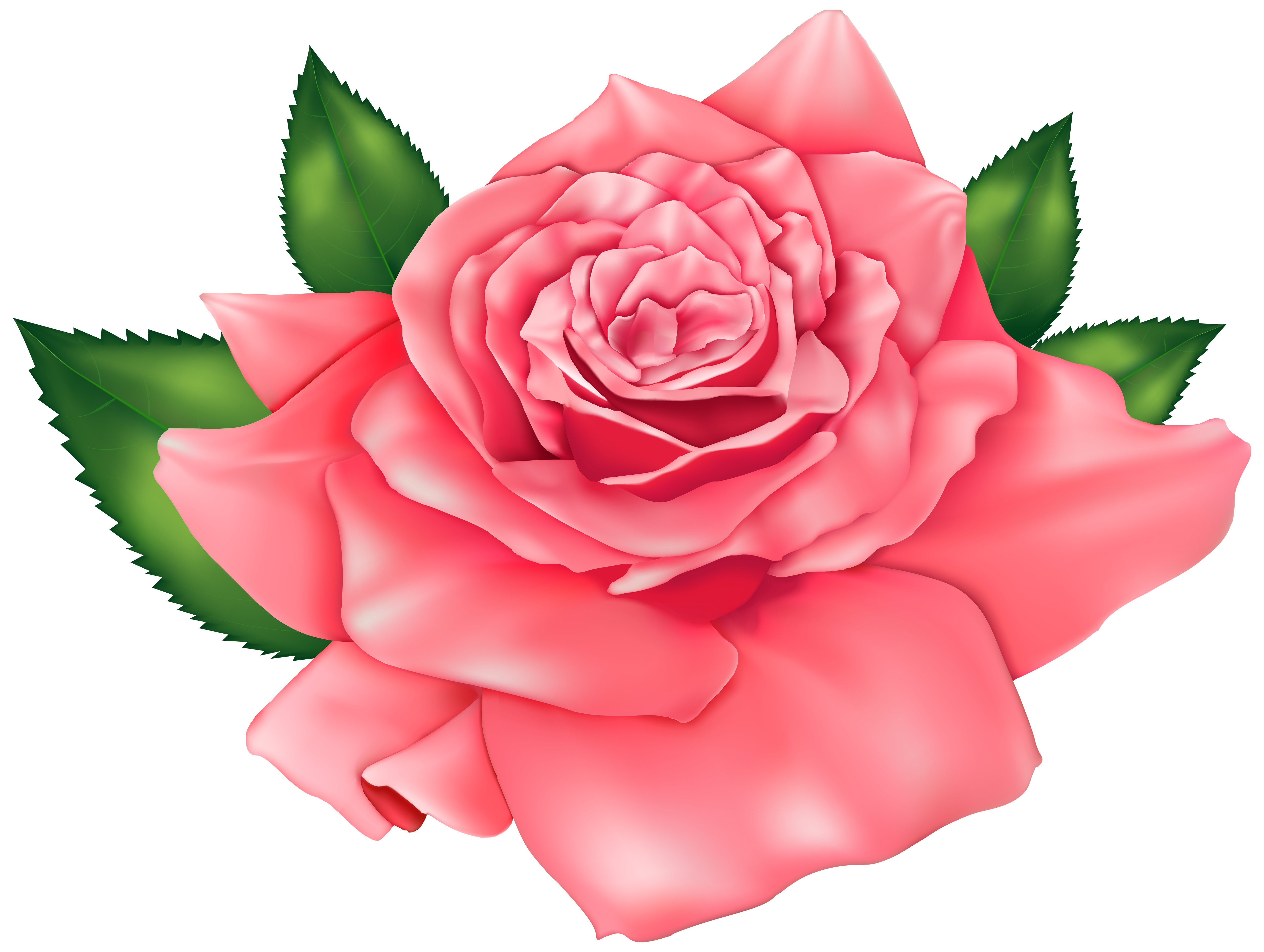Beautiful clipart rose. Pink png image gallery