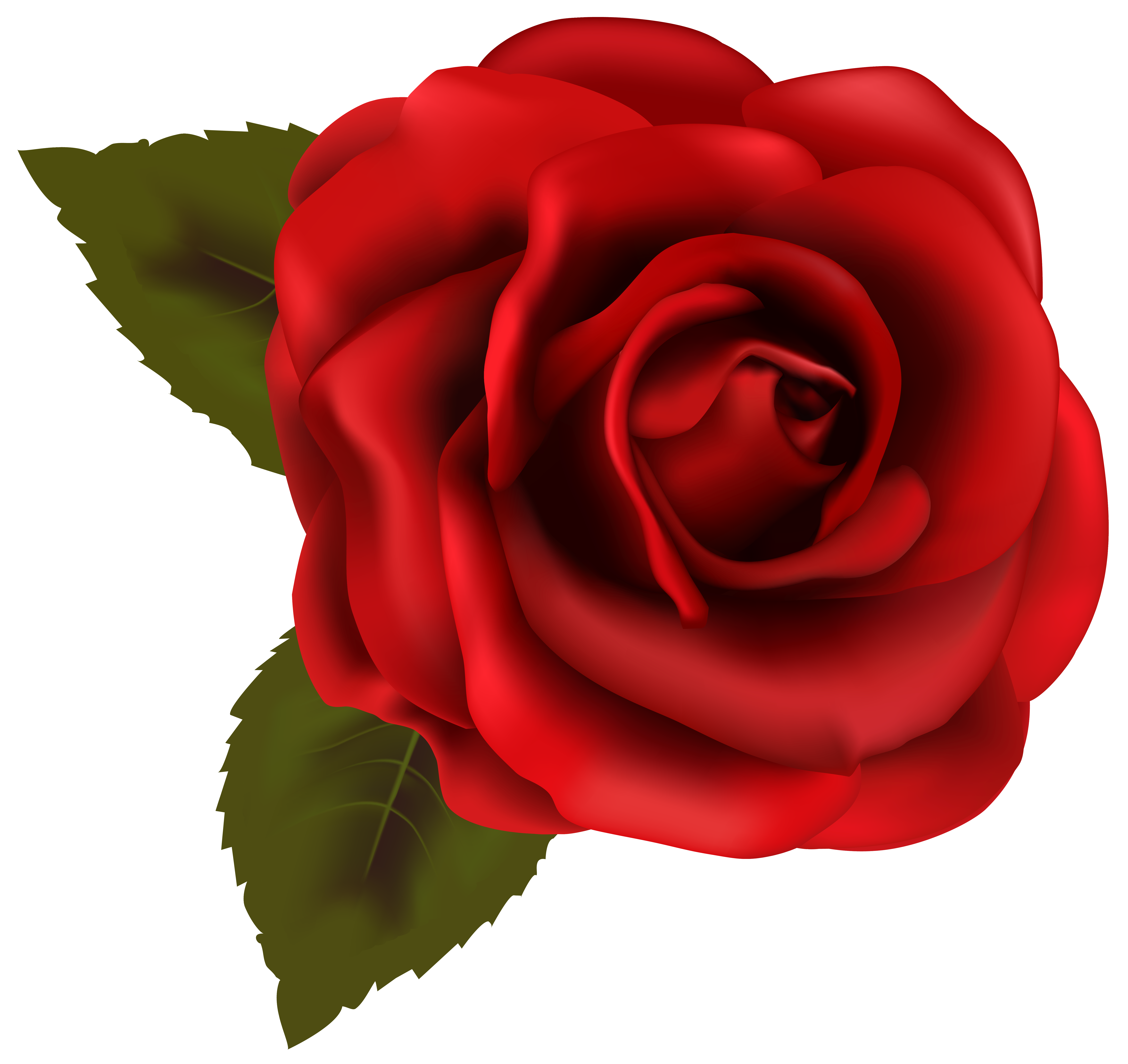 Beautiful red transparent png. Rose clipart clear background