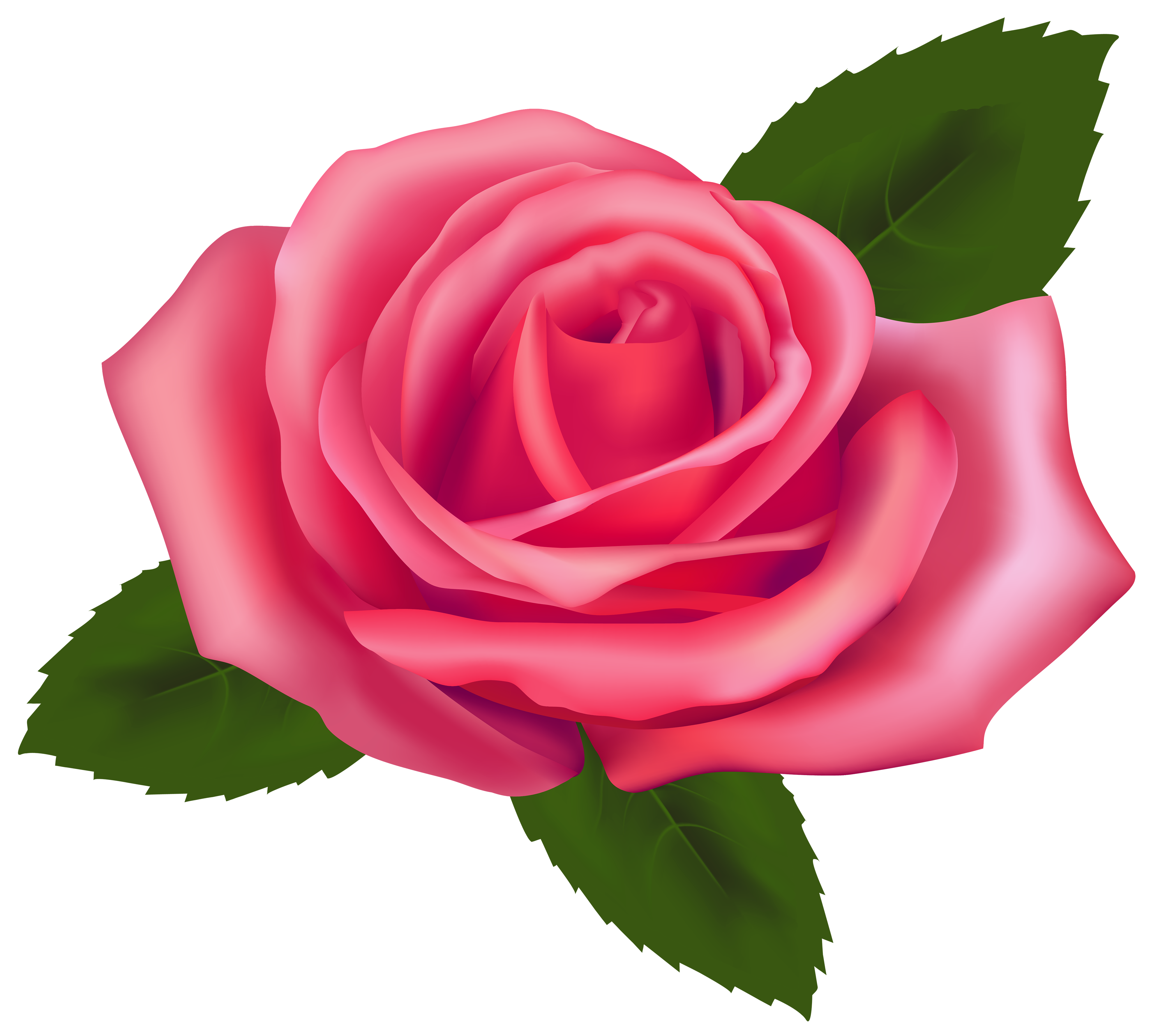 Beautiful pink clipart best. Rose vector png