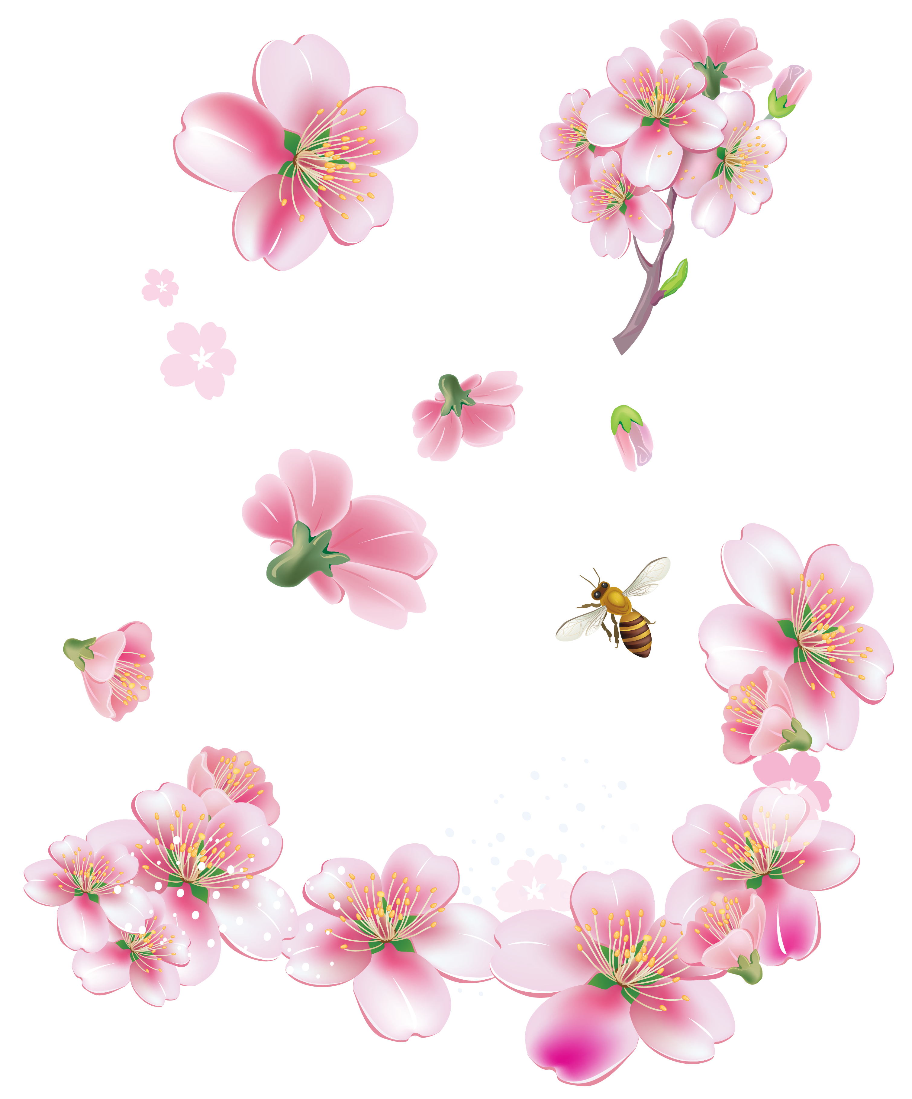 Spring pink trees flowers. Cherry blossom flower png