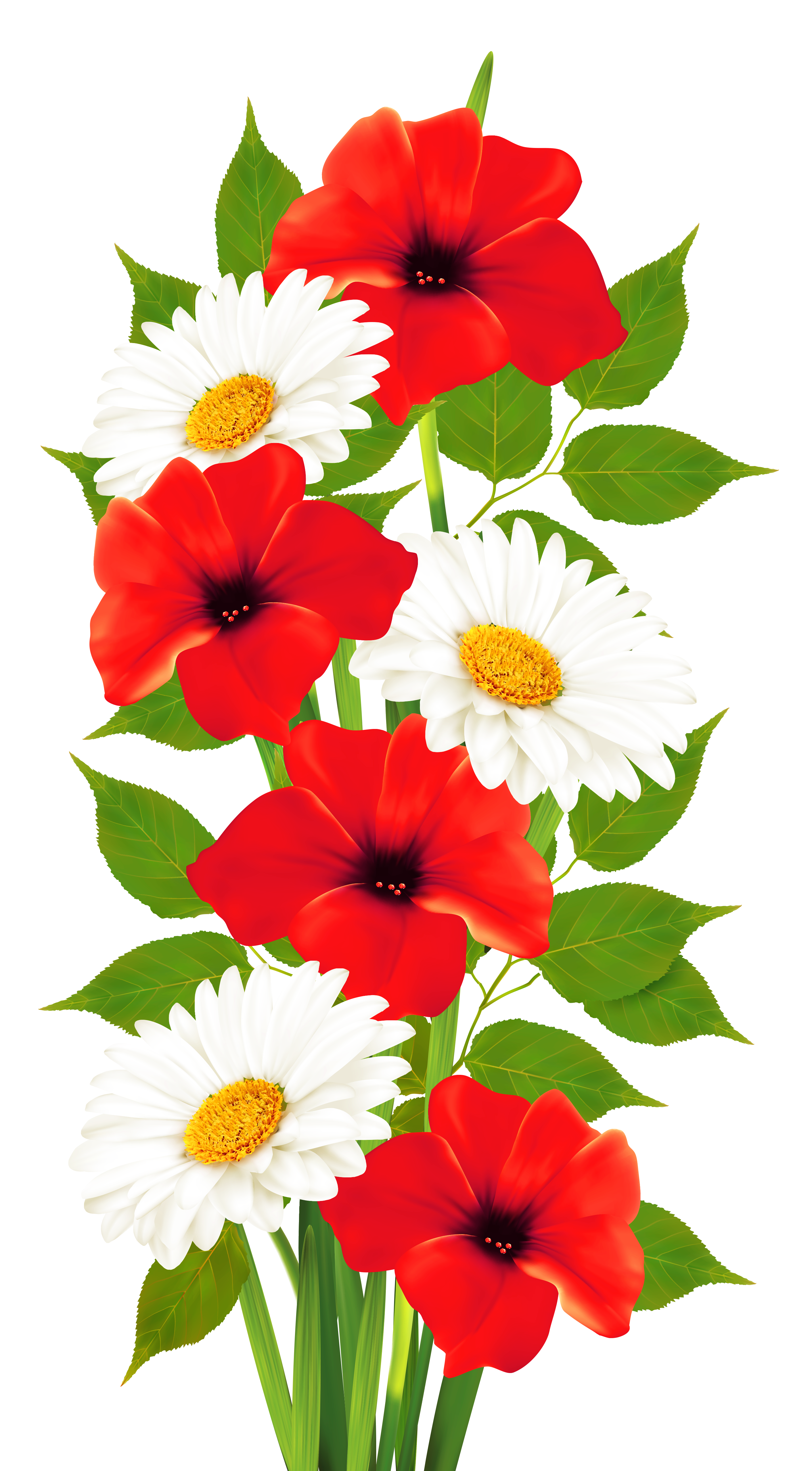 Poppy clipart daisy. Poppies and daisies transparent