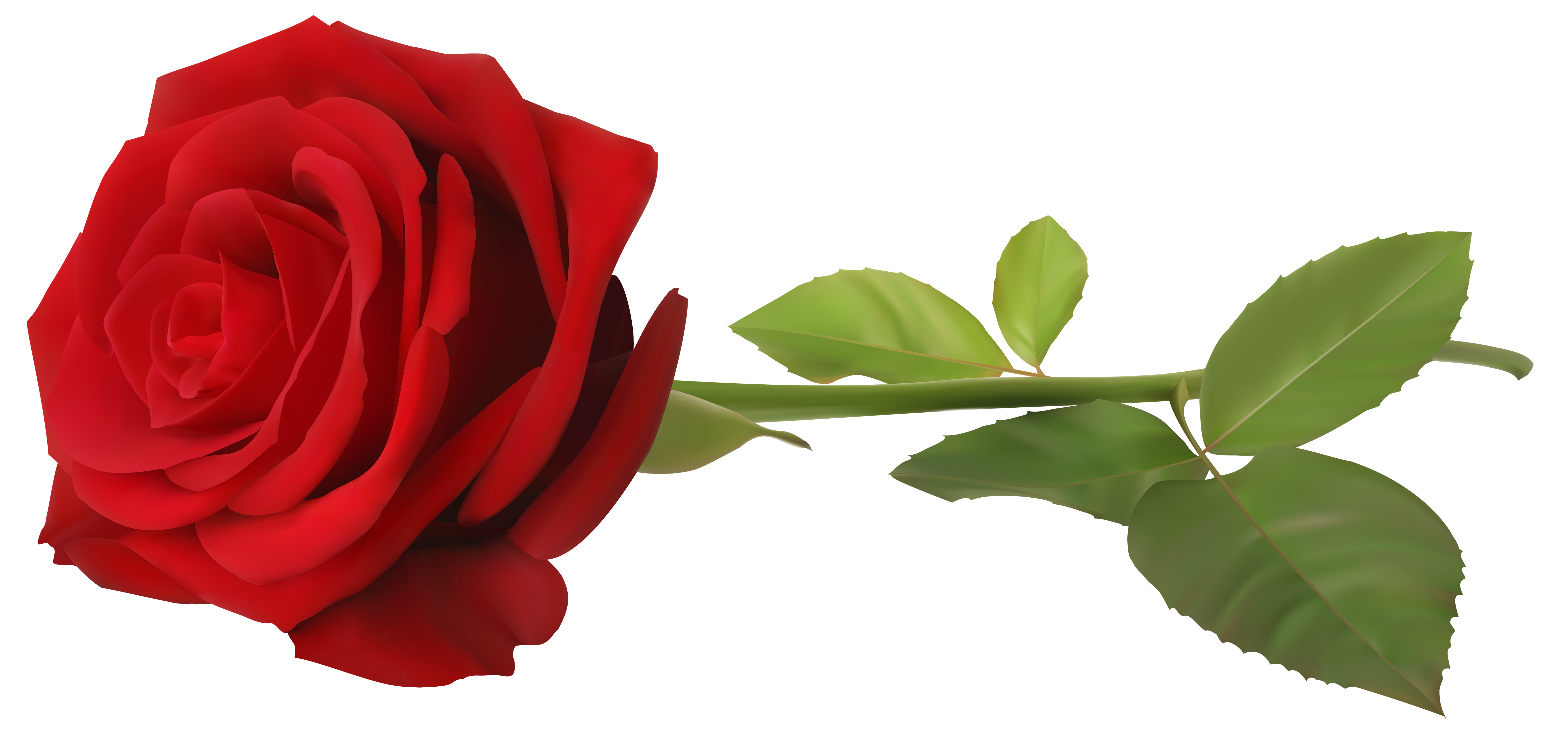 Clipart roses curved. Red rose with stem