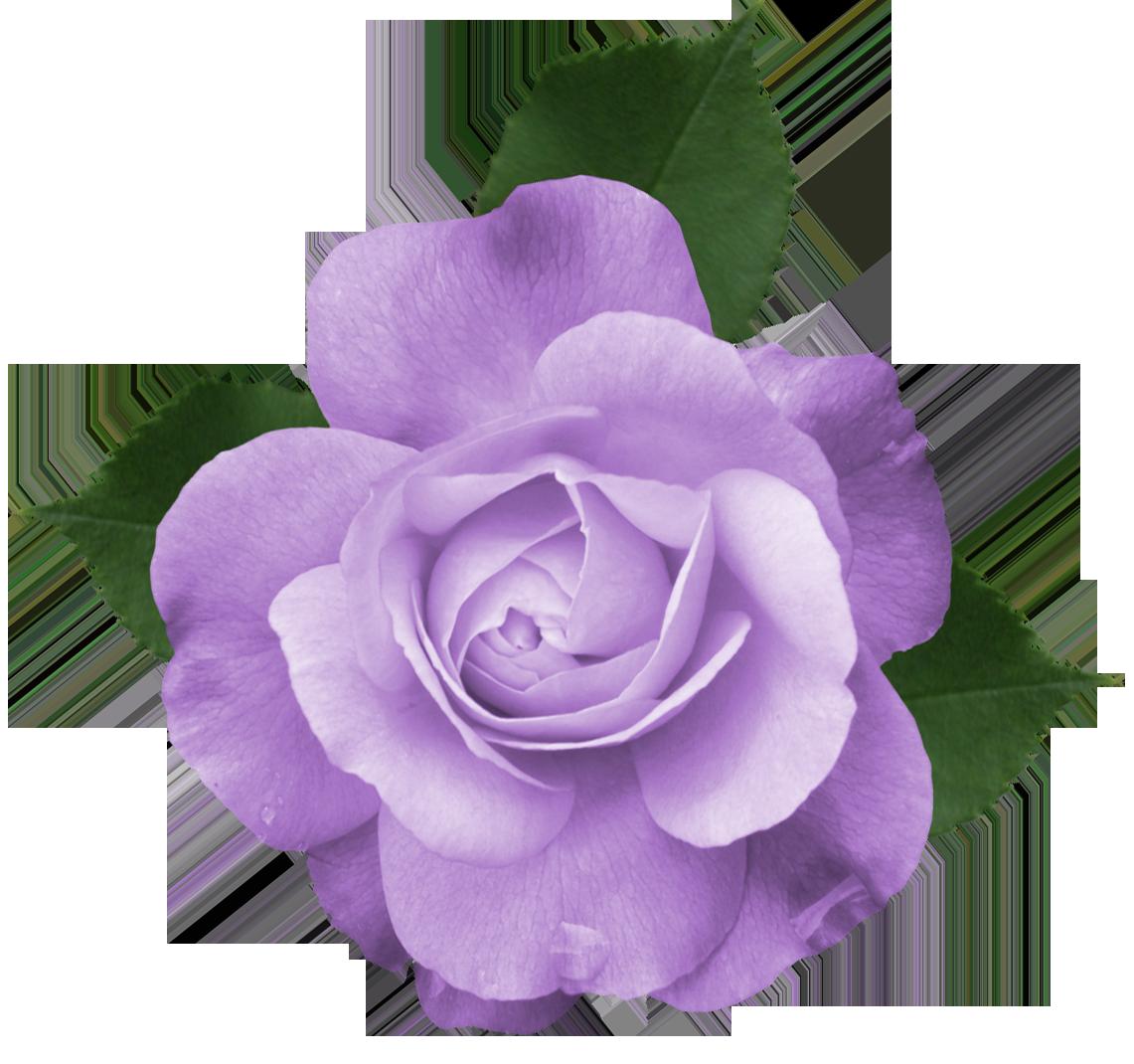 rose clipart purple #141261920