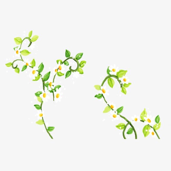Beautiful clipart vine. Flower chrysanthemum png image