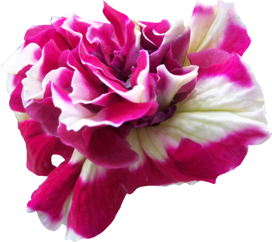 By thy darkest hour. Beautiful flower png