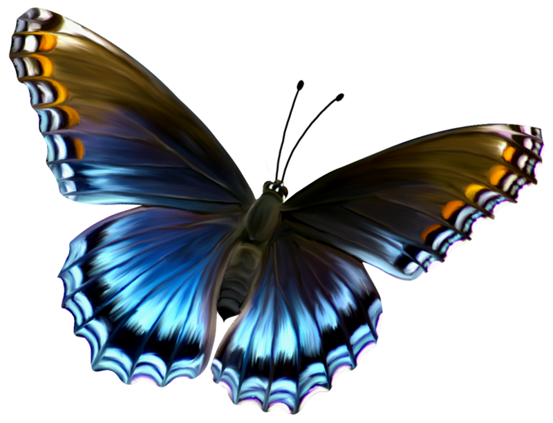 Deviantart more like beautiful. Beauty clipart butterfly