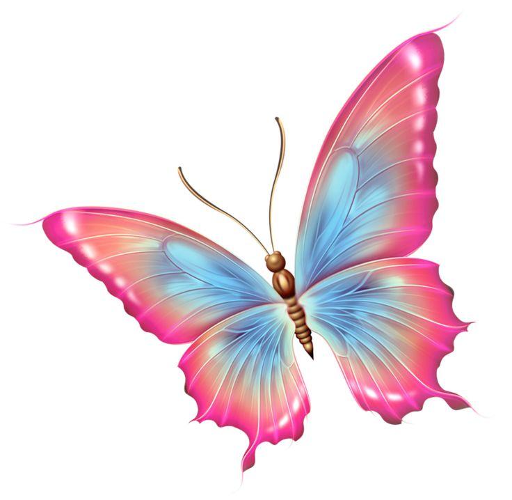 Beauty clipart butterfly.  best butterflies images