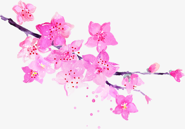 Beauty clipart flower. Pink watercolor flowers png