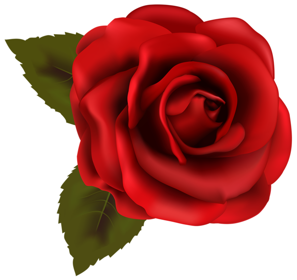 See clipart nice. Beautiful red rose transparent
