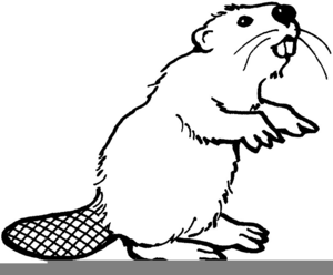 Oregon state free images. Beaver clipart