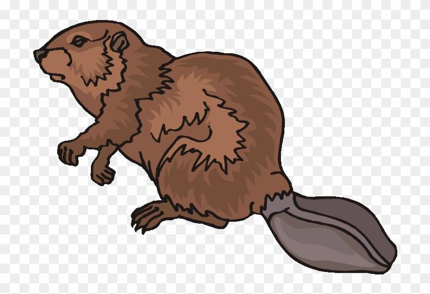 Beaver clipart. Top clip art png