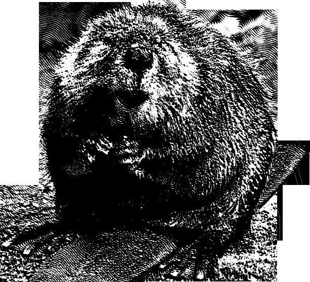 Footprints clipart beaver. Png mart