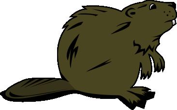 Png . Beaver clipart transparent background