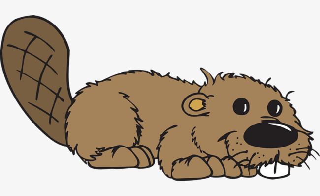 Brown cute animal png. Beaver clipart transparent background