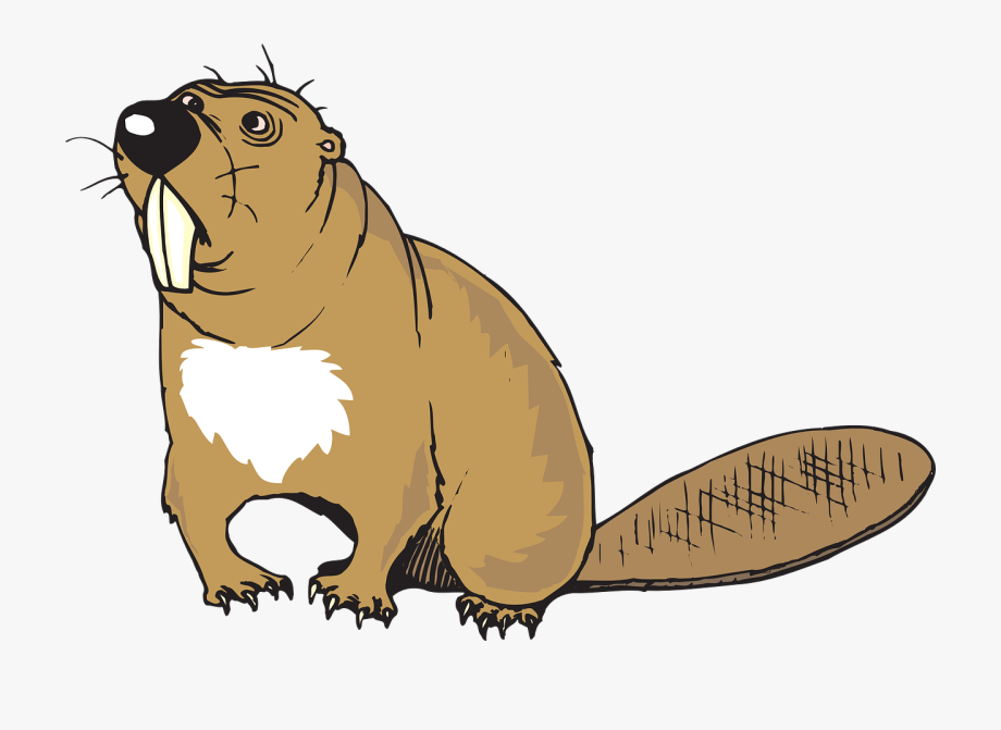 Beaver clipart transparent background. Animal tail beavers with