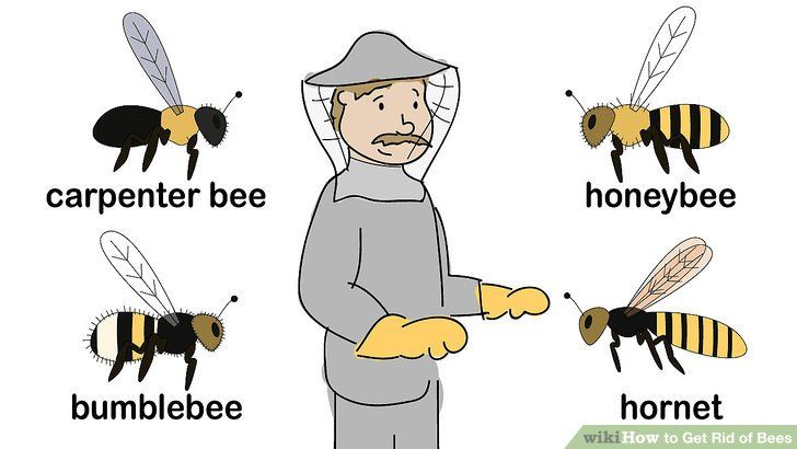How to get rid. Bee clipart carpenter bee