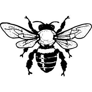 Honey clip art vector. Bee clipart carpenter bee