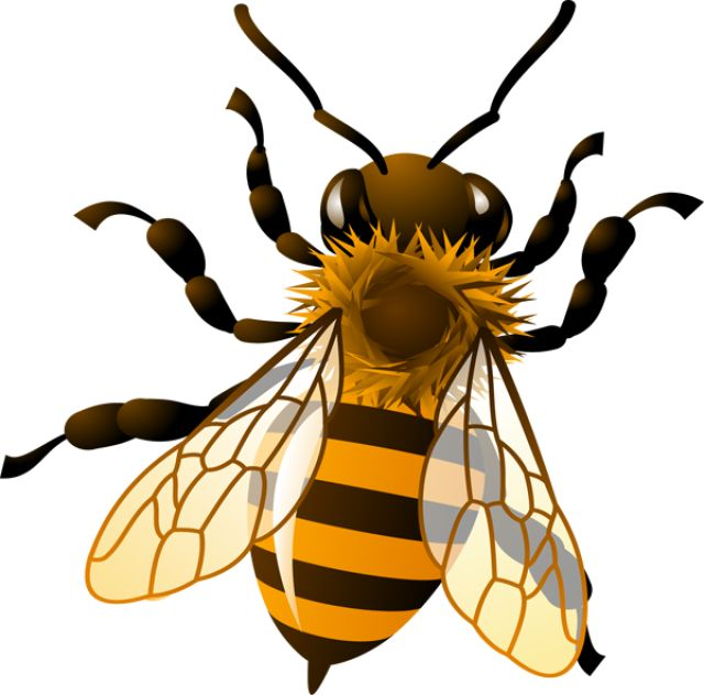 best pea s. Bee clipart honey bee