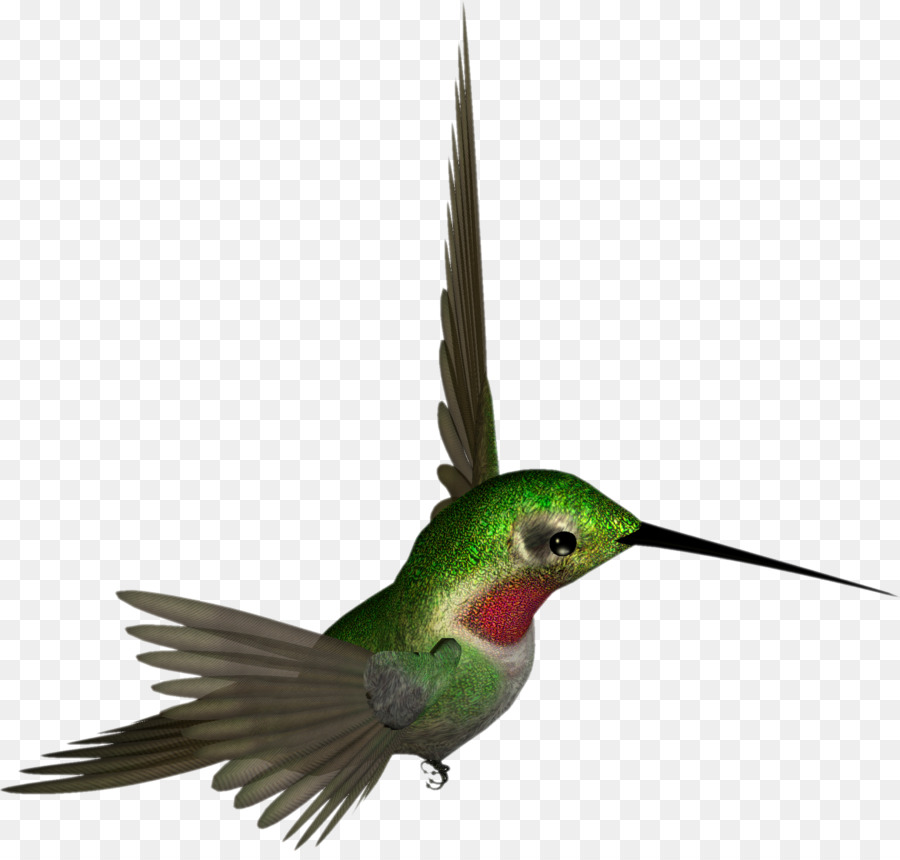 Bee clipart hummingbird. Ruby throated clip art
