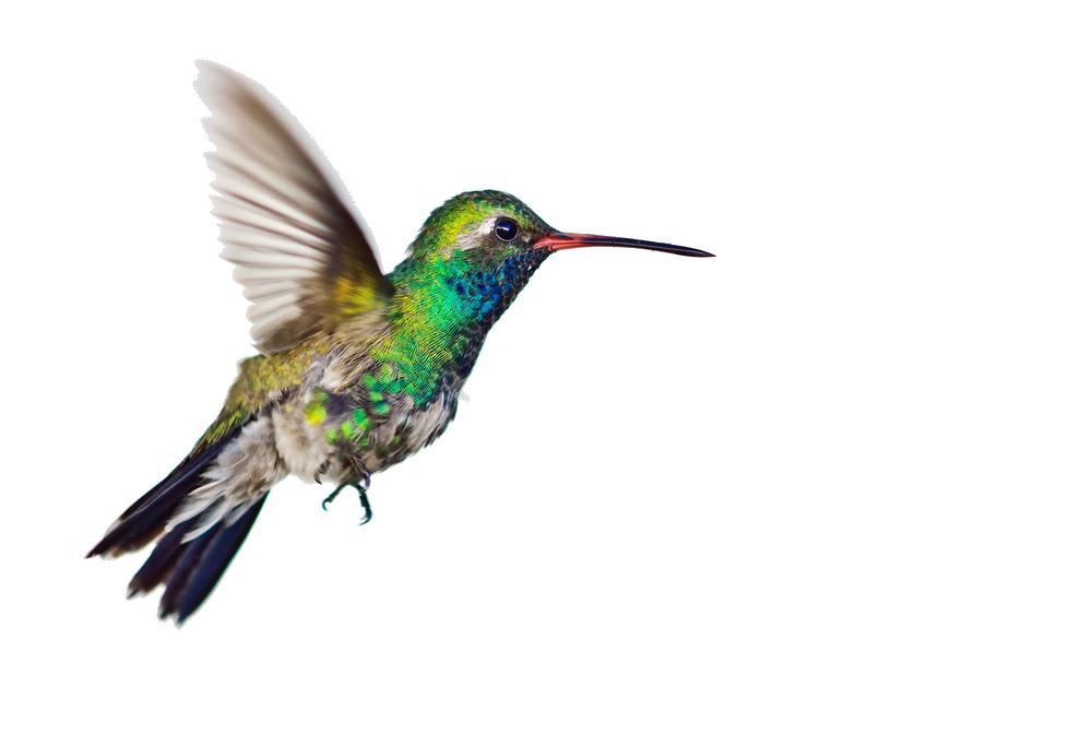 Bees clipart hummingbird. Png transparent images all