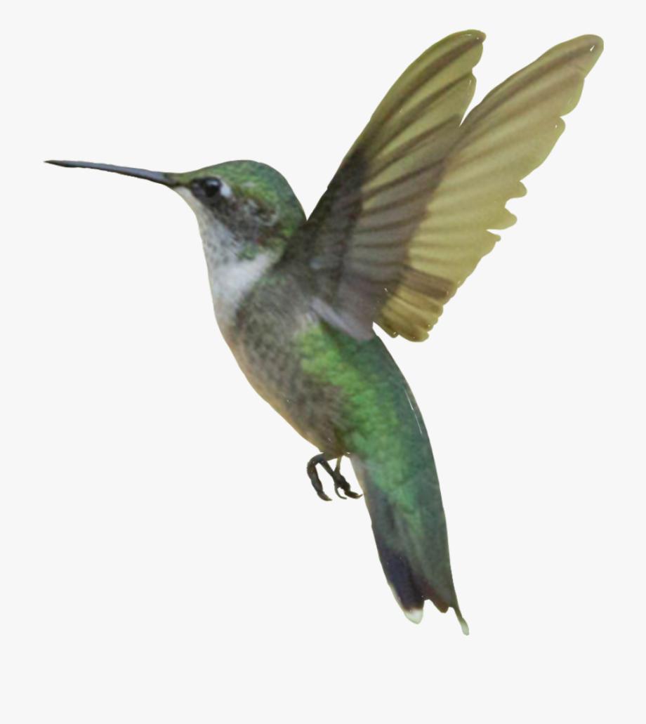 Sticker . Hummingbird clipart ruby throated hummingbird