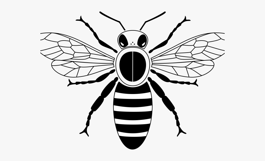 Bees clipart simple. Honey bee drawing