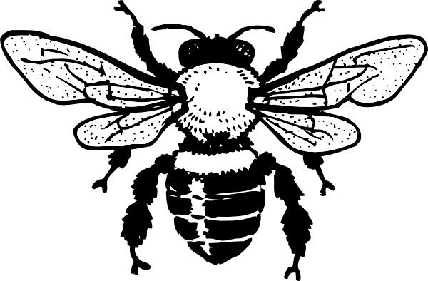 Honey bee clip art. Bees clipart vector