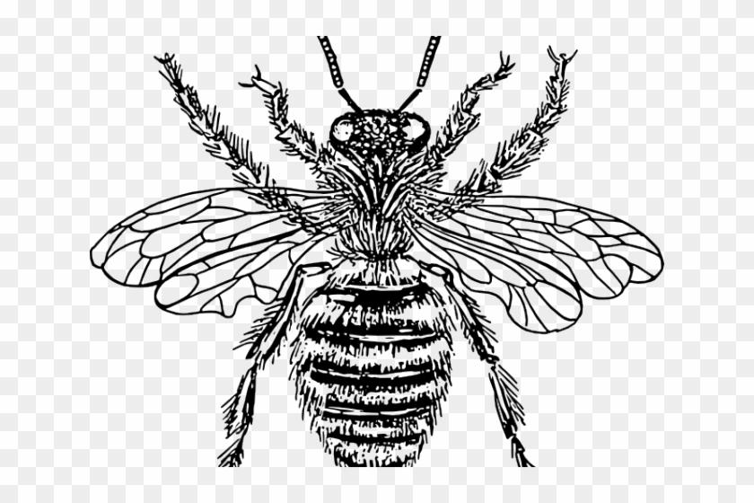 Bee clipart victorian. Bees diagram of queen