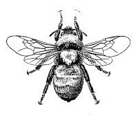 Bees clipart victorian. On pinterest beekeeping supplies