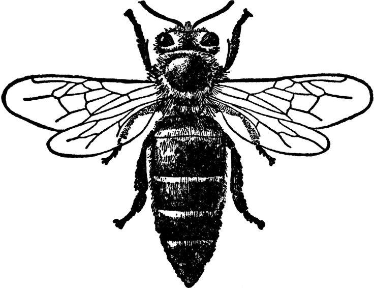Bees clipart sketch.  best tt images