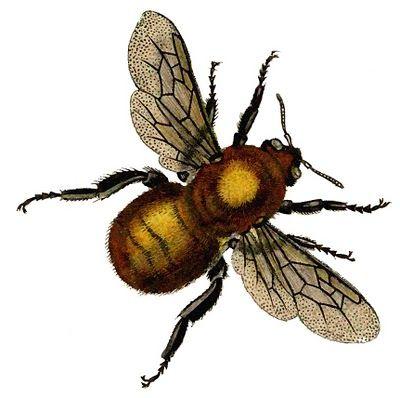 Bee clipart victorian. Vintage clip art beautiful