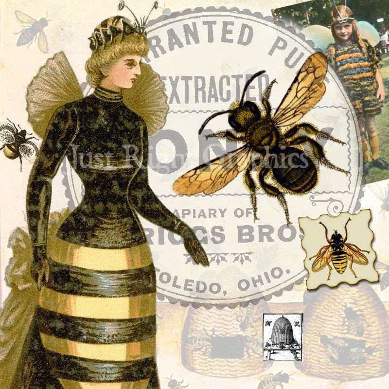 Bee free on dumielauxepices. Bees clipart victorian