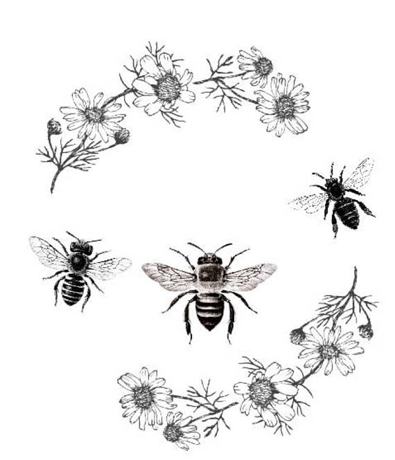Bee clipart vintage. Print poster daisy flowers