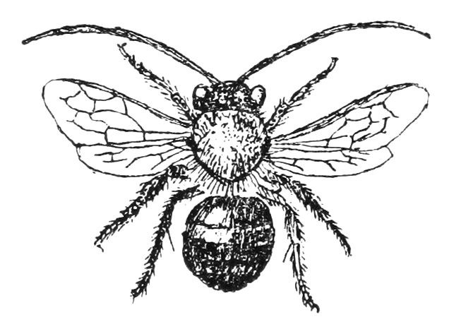 Clipartuse. Clipart bee vintage
