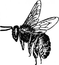 Bee clipart vintage. Drawing